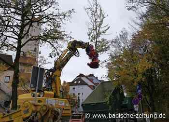 Neue Bäume und Sträucher für die Elz - Waldkirch - Badische Zeitung - Badische Zeitung