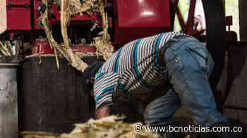 En Supía le apuestan a licores agrícolas con paneleros - BC Noticias