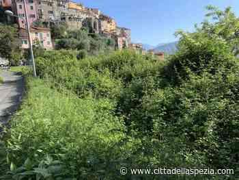 """""""Terreni in via Cornia abbandonati"""", Cinquestelle di Vezzano presentano interpellanza - Città della Spezia"""