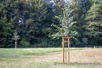 Ziel erreicht: Über 800 Bäume zum Alsfeld-Jubiläum bereits gepflanzt - Oberhessen-live