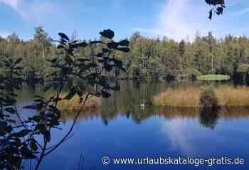 Auf Torfwegen durch eine mystische Riedlandschaft   Bad Waldsee, Oberschwaben - Urlaubskataloge-gratis