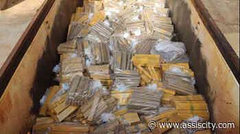 Polícia Civil de Palmital incinera cerca de 2 toneladas de maconha - Assiscity