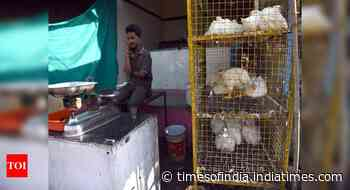 Centre asks states to re-open poultry shops; animal welfare groups insist on not lowering guard