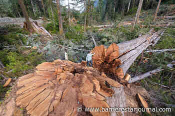 Watchdog: logging practices put Vancouver Island old growth, biodiversity at risk – Barriere Star Journal - Barriere Star Journal