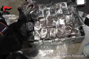 Vignate, oltre 200 chili di hashish dalla Spagna nascosta nel mangime per animali: arrestati - Fanpage.it