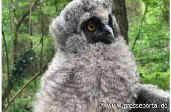 POL-PDLD: Eulenküken aus Nest gefallen