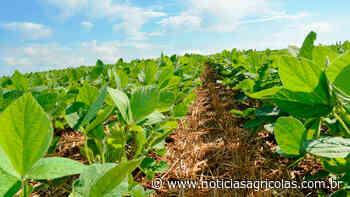 Canarana/MT enfrentou grande falta de chuvas em novembro e dezembro e perdas de produtividade na soja já são de 10% - noticiasagricolas.com.br