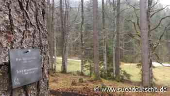 Mittenwald: Begräbniswald der Staatsforsten öffnet - Süddeutsche Zeitung