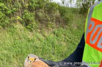POL-PDNW: Greifvogel gerettet