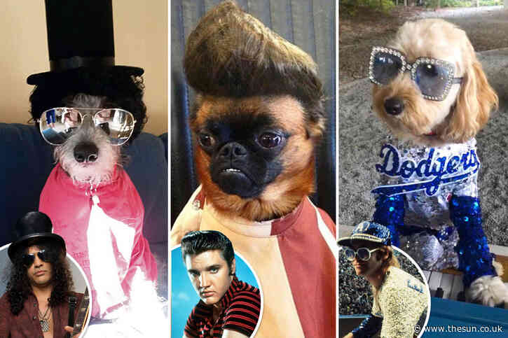 From Lady Gaga to Elton John — these dogs have real star quality as celeb lookalikes