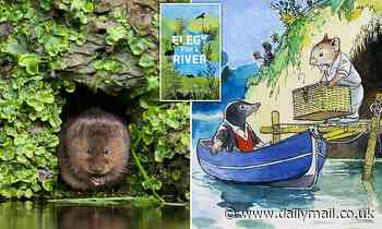 The water vole are as vicious as they are cunning. They're also in danger of vanishing for ever