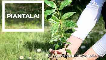 Rifiuti, Comune di Suzzara con il Wwf: sui social le immagini positive - La Gazzetta di Mantova