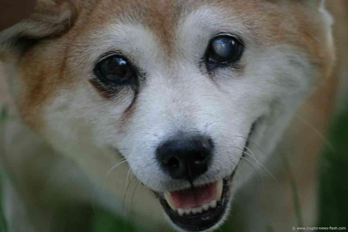"""KuCoin und Binance unterstützen Shiba Inu (SHIB), der """"DOGE-Killer"""" nimmt Fahrt auf - Crypto News Flash"""