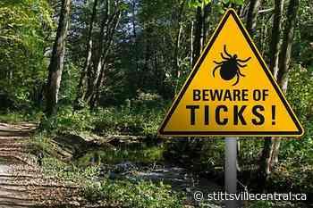 The season of ticks has arrived - StittsvilleCentral.ca