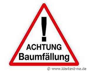 Fäll-Arbeiten auf dem Bahndamm im Gemeindegebiet von Rommerskirchen - Klartext-NE.de