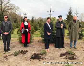 Mayor of Bromley plants Georgian Christmas trees at organic farm - newsshopper.co.uk