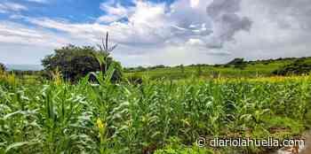 Actividad agrícola en San Juan Opico es impulsada por el Gobierno para mejorar los niveles de producción de maíz - Diario La Huella