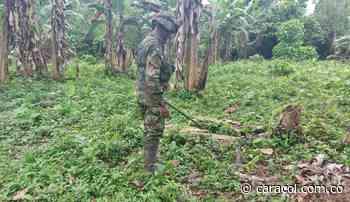 El ejército destruyó dos artefactos explosivos en un resguardo indígena - Caracol Radio