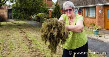 Fuming woman, 78, says council leaving 'nightmare' piles of grass outside home