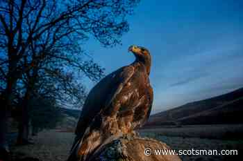 New golden eagle visitor hub celebrating Scotland's national bird opens in the Borders - The Scotsman