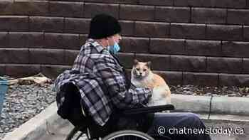 Residents at Valleyview befriend Peko the cat - CHAT News Today