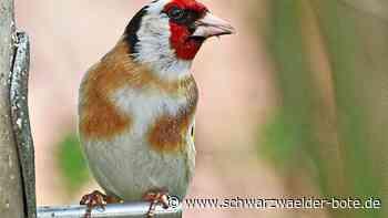 Balingen - Nabu ruft auf zur Vogelzählung - Schwarzwälder Bote