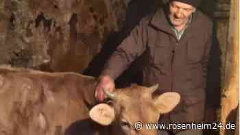 Eine Kuh als Retterin: Bad Endorf plant Hilfsprojekte in der Ukraine