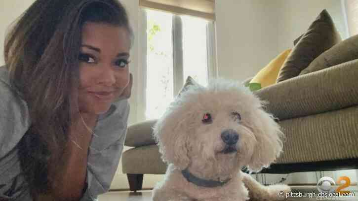 PetSmart Employees Charged After Dog Dies During Grooming; CBS Sports Reporter AJ Ross Left Heartbroken