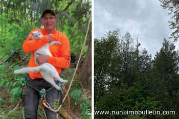 Tree cutter rescues cat stuck 100 feet up a dead and dried-out cedar