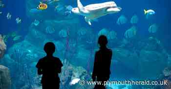 National Marine Aquarium Plymouth limiting visitor numbers to 1,000 a day - Plymouth Live