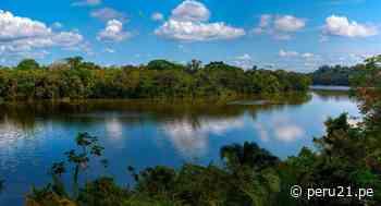 Conoce la iniciativa que ayudará a reforestar la Reserva Natural de Tambopata - Diario Perú21