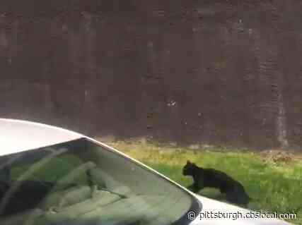 Amazing Video: Cat Jumps From Fifth-Floor Window Of Burning Building — And Lands Safely!