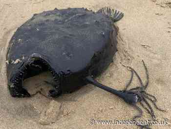 The weird creatures washing up on US beaches this year