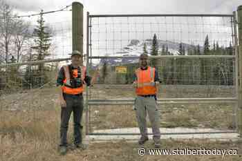 Fences hot-wired to keep bears off highway in Banff - St. Albert Today
