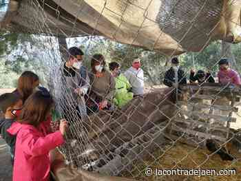 El colegio rural Valle de San Juan apuesta por gallineros escolares - Lacontradejaen