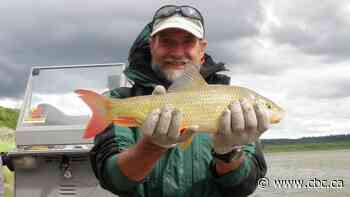 Spawning suckerfish embark on fish runs in Alberta's lakes and streams
