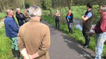 Naturschutz: Biber gefährdet mit Staudamm-Bau einen Radweg bei Gransee - moz.de