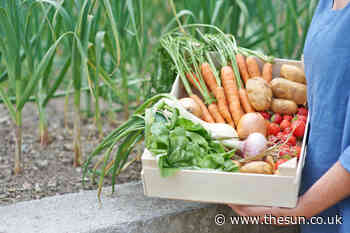 More than half of Brits are growing their own fruit & vegetables at home – but many wish they had a bigger... - The Sun