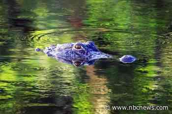 Florida man wrestle alligator to save his dog
