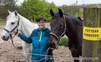 Besucher füttern unerlaubt Pferde auf dem Fisslerhof in Tamm: Karotten und Äpfel können Pferde krank machen - Bietigheimer Zeitung