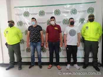 Capturados ladrones de ganado en Pitalito, uno de ellos robó a su propia mamá • La Nación - La Nación.com.co