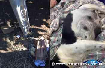 Tutoras responderão criminalmente por maus-tratos de animais em Capinzal - Rádio Capinzal