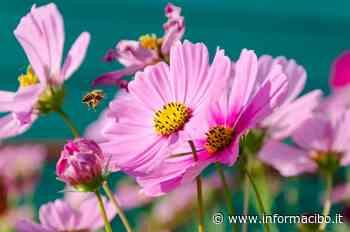 Giornata mondiale delle api: come fare una bomba di fiori - InformaCibo