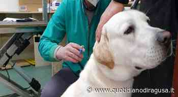 Microchip day a Pozzallo, microcippati 43 cani - Quotidianodiragusa.it