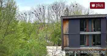 Krähen nerven mit Geschrei und Kot Anwohner in Bad Waldsee - Schwäbische