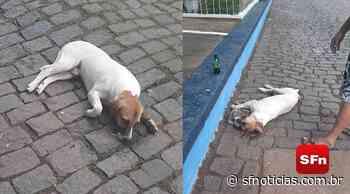 Envenenamento de cachorro gera revolta entre moradores de Euclidelândia, em Cantagalo - SF Notícias