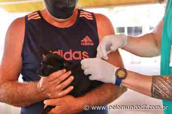 Senador Canedo já vacinou quase 1.500 animais na Campanha de Vacinação Antirrábica - Pelo Mundo DF