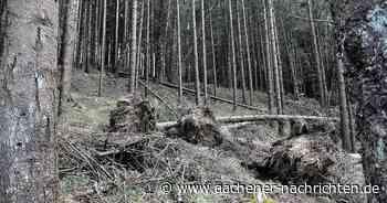 Überraschendes Plus im Gemeindewald von Simmerath - Aachener Nachrichten
