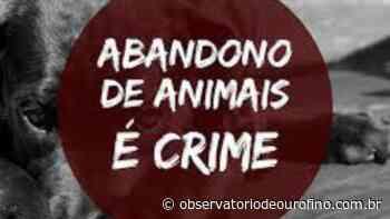 Homem que abandonou cães no Estradão em Ouro Fino grava vídeo e gera revolta nas redes sociais - Observatório de Ouro Fino