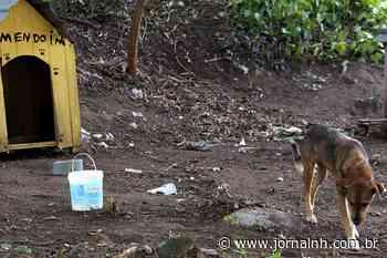 Canil de Esteio instala passeadores e casinhas para seus cães - Jornal NH
